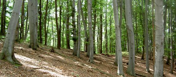 Talajvédelmi rendeltetésű, Natura 2000-es erdő