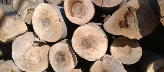Bükk hengeres tűzifa